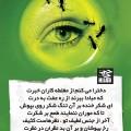 نگاه به نامحرم حرام است؟